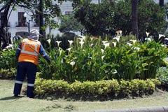 Lavoratore nel parco a Quito immagine stock libera da diritti