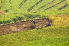 Lavoratore sul campo di mais Immagini Stock Libere da Diritti