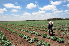 Lavoratore tailandese straniero nell'Israele Immagini Stock
