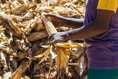 Lavoratori ad un'azienda agricola Fotografie Stock Libere da Diritti