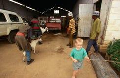 Lavoratori ad un'azienda agricola in Sudafrica. Immagine Stock Libera da Diritti