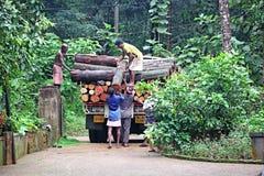 Lavoratori che caricano i tronchi di albero sul camion Fotografie Stock Libere da Diritti