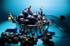 Lavoratori del minatore del mirtillo in un vaso Fotografia Stock