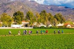 Lavoratori di agricoltura del giacimento della fragola Fotografia Stock Libera da Diritti