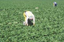 Lavoratori migranti Fotografia Stock