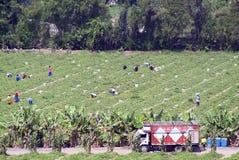 Lavoratori nel campo Immagine Stock