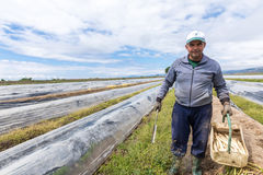 lavoratori nell'azienda agricola durante la raccolta dell'asparago bianco Fotografia Stock Libera da Diritti
