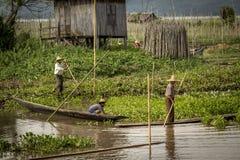 Lavoratori nelle piante di galleggiamento di pomodori nel Myanmar Fotografia Stock
