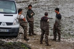 Lavoratori sulla costa del lavoro del mare celtico su un'azienda agricola dell'ostrica Azienda agricola del mare fotografie stock