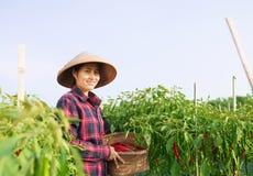 Lavoratrice agricola Immagine Stock Libera da Diritti
