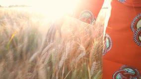 Lavoratrice agricola africana in vestiti tradizionali che toccano un campo dei raccolti al tramonto o all'alba video d archivio
