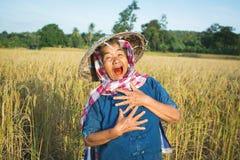 Lavoratrice agricola anziana che lavora al giacimento del riso sulla stagione del raccolto Immagini Stock