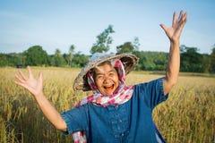 Lavoratrice agricola anziana che lavora al giacimento del riso sulla stagione del raccolto Fotografia Stock