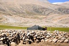 Lavoratrice agricola del villaggio di Korzok, Ladakh, il Jammu e Kashmir Fotografie Stock
