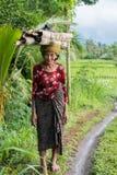 Lavoratrice agricola indonesiana che cammina attraverso le risaie in Ubud, Fotografia Stock