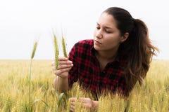 Lavoratrice agricola in un campo di grano Immagini Stock