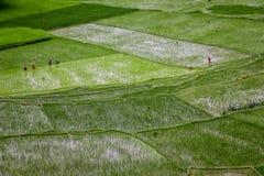 Lavoratrici e agricoltori che lavorano nei campi immagine stock libera da diritti