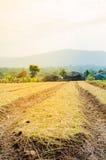 Lavorazione arata del terreno coltivabile del campo Immagine Stock