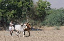 Lavori sul terreno in India fotografie stock libere da diritti