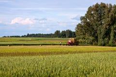 Lavoro agricolo Fotografia Stock Libera da Diritti