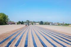 Lavoro agricolo Immagine Stock