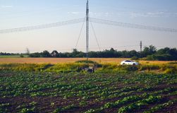 Lavoro agricolo nel campo un giorno di estate Immagine Stock Libera da Diritti
