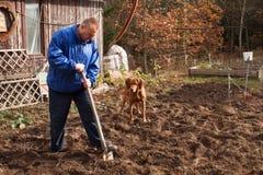 Lavoro agricolo Ritratto di un suolo di scavatura dell'uomo con la pala L'autunno pulisce Un agricoltore che prepara il terreno p fotografia stock