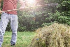 Lavoro agricolo su fieno che raccoglie nel campo Un uomo raccoglie l'erba asciutta con le forche Fotografia Stock Libera da Diritti