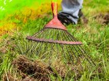 Lavoro agricolo su fieno che raccoglie nel campo Un uomo raccoglie l'erba asciutta con le forche Immagine Stock