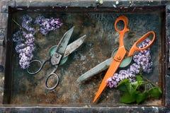 Lavoro approssimativo di forbici nere del metallo e forbici arancio lunghe di fronte ad a vicenda su fondo arrugginito circondato Immagini Stock