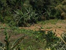 Lavoro degli agricoltori Fotografia Stock Libera da Diritti