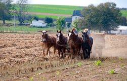 Lavoro degli agricoltori di Amish immagini stock