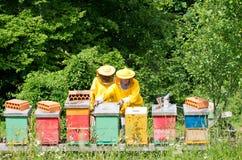 Lavoro degli apicoltori Fotografie Stock Libere da Diritti