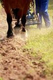 Lavoro dei cavalli Fotografia Stock Libera da Diritti