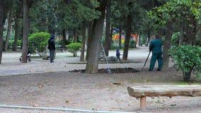 Lavoro dei lavoratori nel parco archivi video