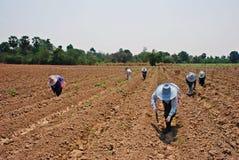 Lavoro dei lavoratori sull'azienda agricola Fotografie Stock