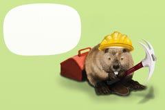 Lavoro del castoro Immagine Stock Libera da Diritti