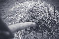 Lavoro dell'agricoltore con la forca nel giardino Fotografia Stock