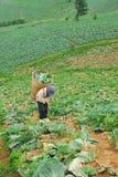 Lavoro dell'agricoltore nel campo del cavolo sulla montagna Phu Thap Boek in PHETCHABUN TAILANDIA Immagine Stock Libera da Diritti