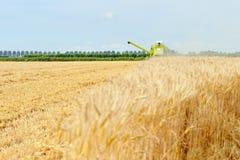 Lavoro dell'associazione della mietitrice del grano nel campo Immagini Stock