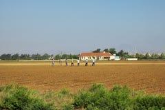 Lavoro della gente sul campo dell'azienda agricola in primavera, semina, semi messi in suolo Comcept di agricoltura fotografia stock libera da diritti