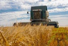 Lavoro della mietitrice nel campo per raccogliere grano Immagini Stock