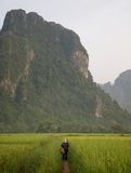 Lavoro della risaia di riso Fotografia Stock