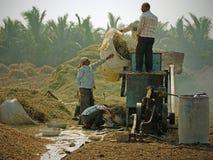Lavoro della trebbiatrice a tempo di raccolto nel Gujarat Immagine Stock