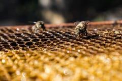 Lavoro delle api fotografie stock libere da diritti