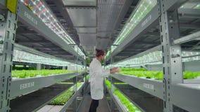Lavoro di gruppo dei biologi che degli agronomi la macchina fotografica si muove lungo il corridoio di un'azienda agricola modern video d archivio