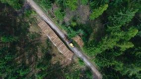 Lavoro di pulizia dopo danni provocati dal maltempo, foresta archivi video