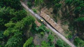 Lavoro di pulizia dopo danni provocati dal maltempo, foresta video d archivio