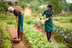 Lavoro di squadra al giardino del cortile Fotografia Stock