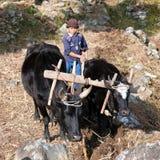 Lavoro duro del piccolo ragazzo non identificato nell'agricoltura Fotografia Stock